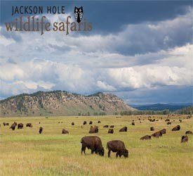 Jackson Hole Wildlife Safaris